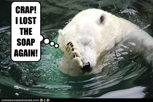 bath,bear,clean,hygiene,lost,polar bear,shower,soap,water