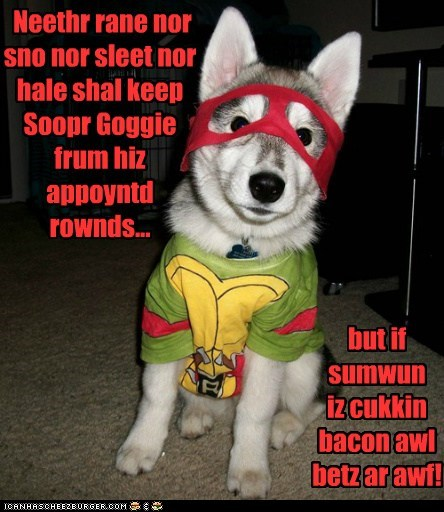 costume,cyoot,funny,husky,puppy