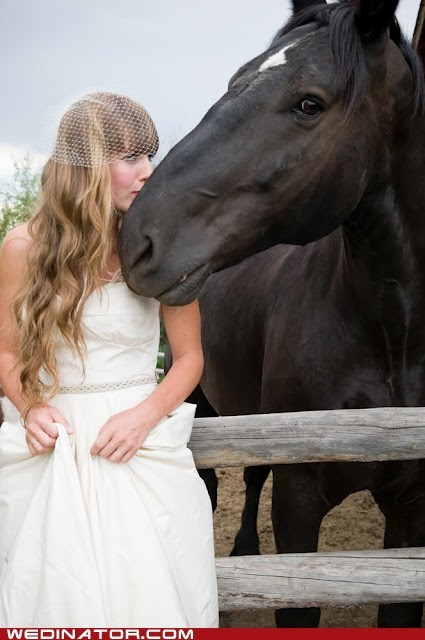 bride,funny wedding photos,horse,KISS