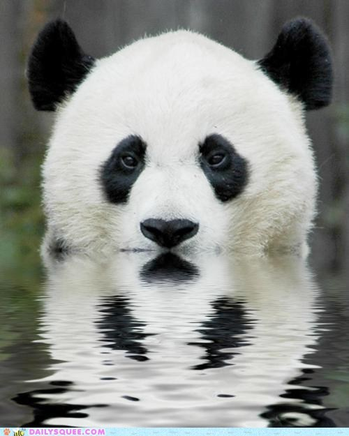 bath,panda,swim,water