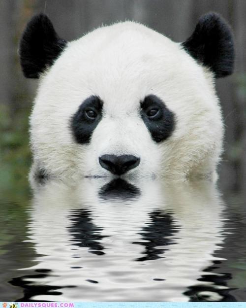 bath panda swim water - 6005006592