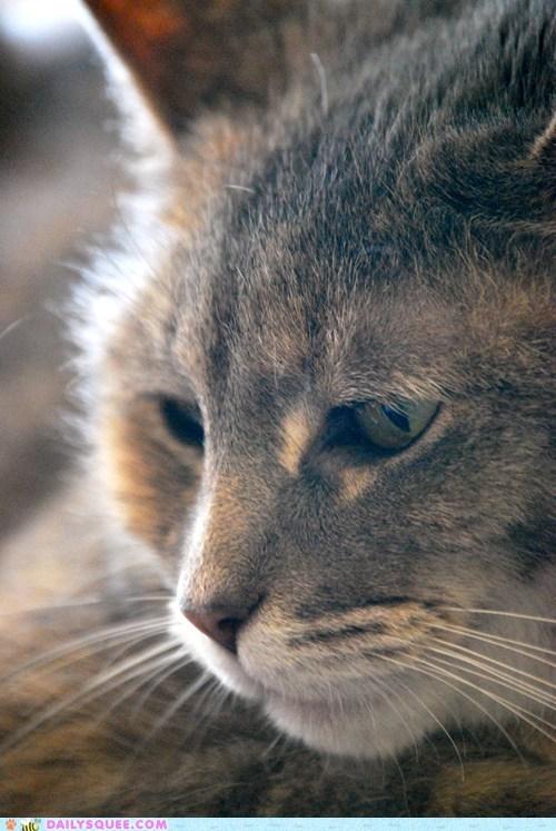 cat close up peep pet reader squees