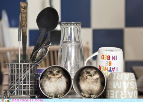 Babies cozy cups hiding kitchen mugs owlets owls rescued squee tiny - 6005160192