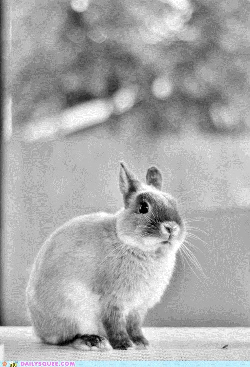 artsy black and white bunny - 6005227008