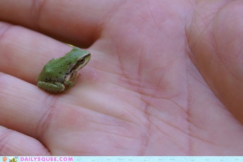 frog,green,hand,ribbit,tiny