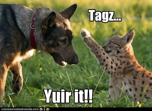 Tagz... Yuir it!!