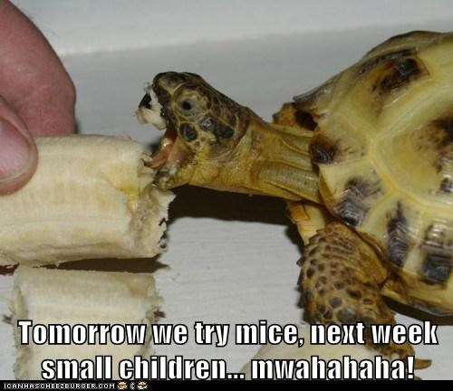 banana children eat evil food hungry nom take over the world tortoise turtle