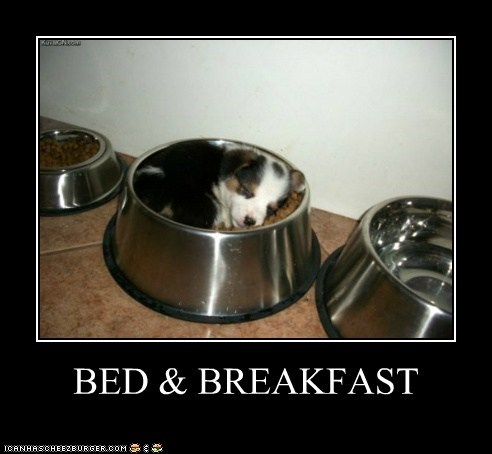 bb bed-breakfast best of the week bowls caption dogs food food bowl Hall of Fame puppy sleeping what breed