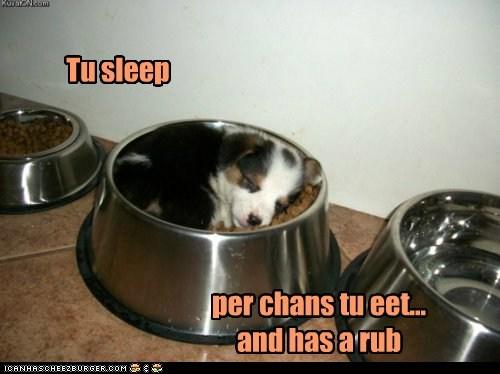 Tu sleep per chans tu eet... and has a rub