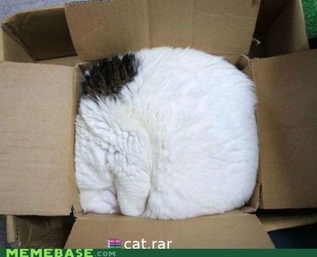 box cat computers Memes rar unzip - 6005876992