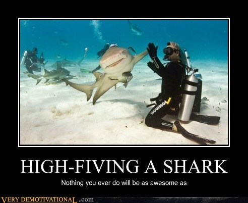 HIGH-FIVING A SHARK Nothing you ever do will be as awesome as