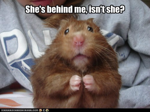 ahh behind big caption frightening hamster hamsters monster scary scream