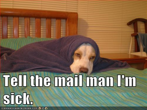 blankets,caption,dogs,mail,mail man,sick,towels,what breed