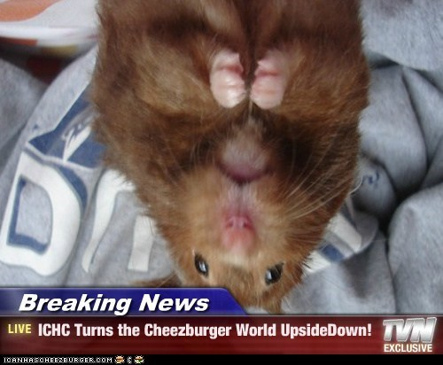 Breaking News - ICHC Turns the Cheezburger World UpsideDown!
