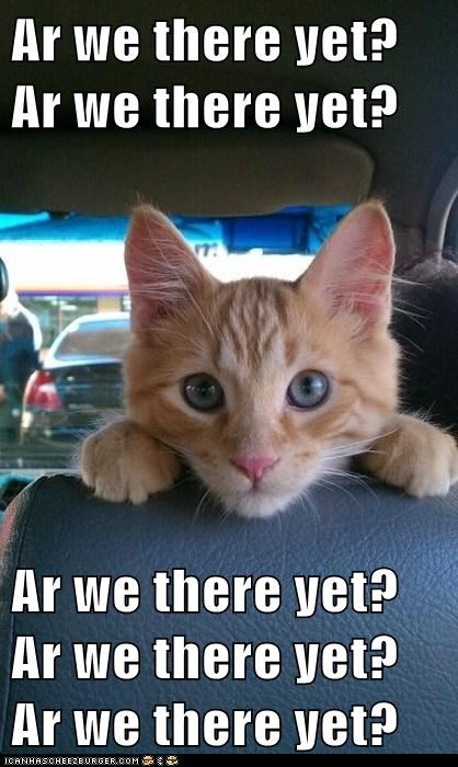 annoying caption car car ride Cats cliché impatient kitten question ride tabby waiting - 6007067648