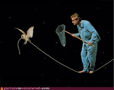 hunting night Owl stars wtf - 6007672064