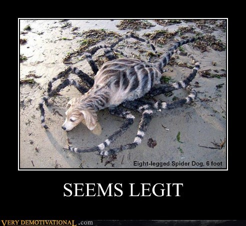 dogs hilarious seems legit spider - 6007740672