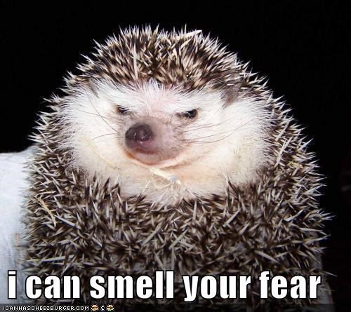 aah,evil,fear,hedgehog,hedgehogs,scary,smell,yikes