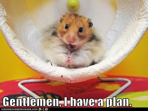 cute,evil,gentlemen,hamster,plan,plans,take over the world,wheel