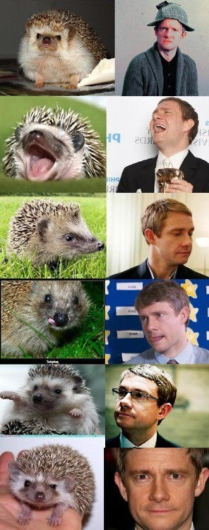 best of the week,expressions,hedgehogs,Martin Freeman,sherlock bbc,totally looks like,Watson