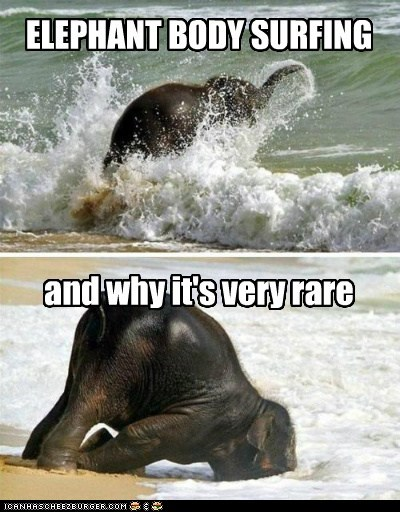 baby,beach,body surfing,elephant,faceplant,fall,rare,swimming