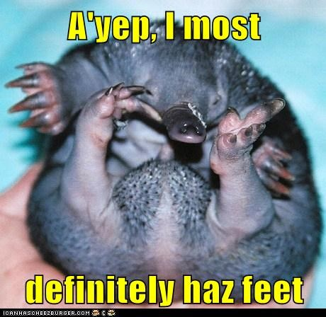 A'yep, I most definitely haz feet