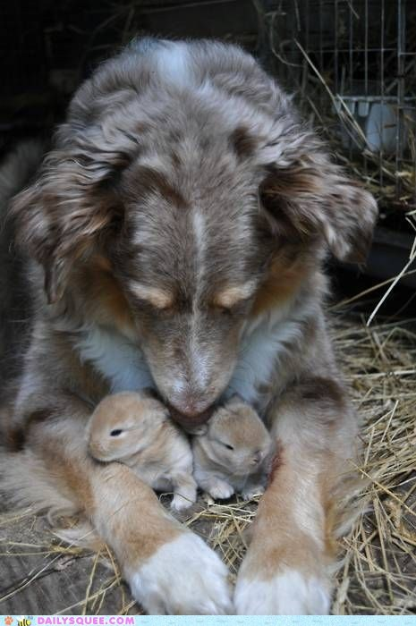 Babies,bunnies,dogs,hay,protect