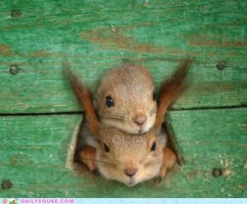 crowded heads hole holes squirrels squished - 6009057024
