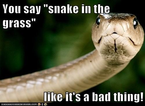 bad thing expression offended snake snake in the grass you say - 6009060096