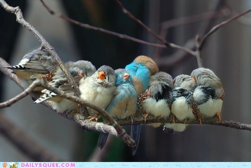 birds branch branches close crowded cuddle lean lots trees