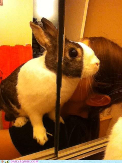 bunny,mirror,shoulder,vanity