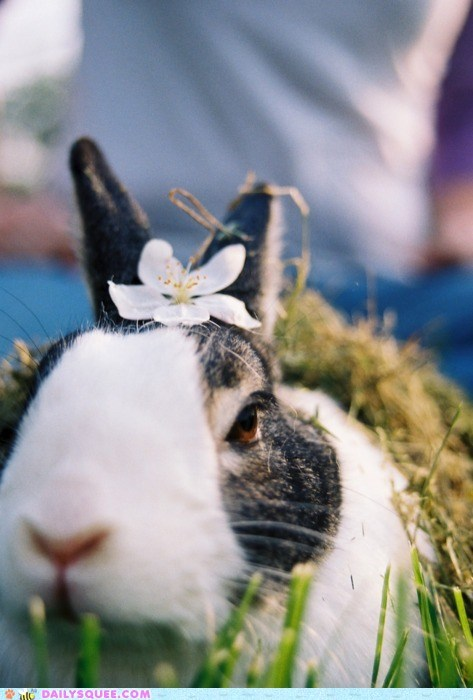 bunny decorate Flower head not amused tiara
