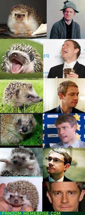 dr john watson,hedgehog,It Came From the Interwebz,look alike,Martin Freeman,sherlock holmes