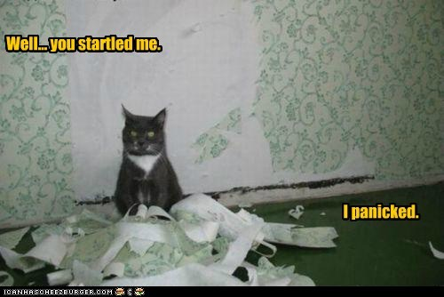 accident caption Cats disaster explanation mess panic panicked reaction startled wallpaper