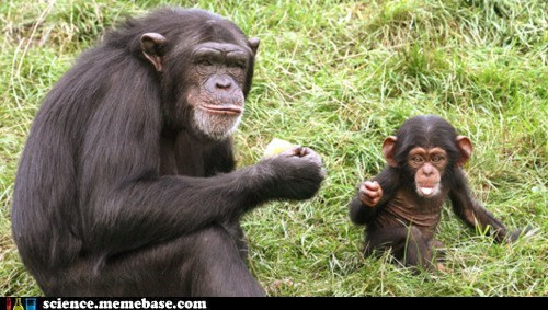 chimpanzees,communication,learning,Life Sciences,speech,teaching