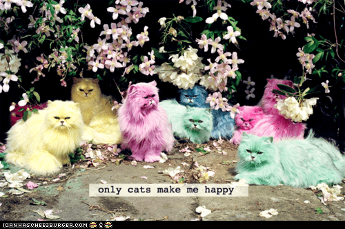 Cats cute happiness happy photoshopped - 6009929728