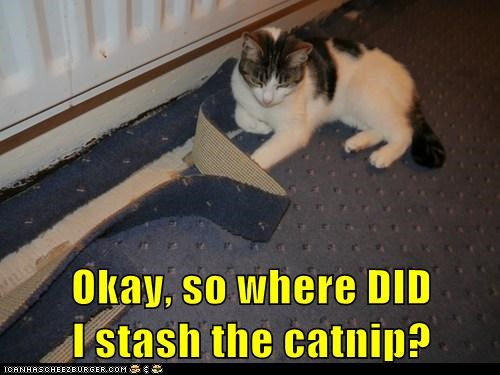 cant,catnip,confused,forgot,location,remember,stash,where