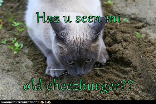 Cheezburger Image 6010075136
