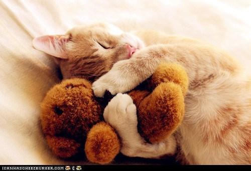bears Cats cyoot kitteh of teh day snuggles stuffed animals teddy teddy bears - 6010672640
