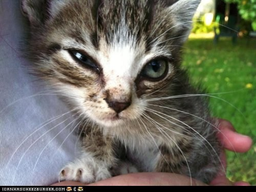 cyoot kitteh of teh day,expression,eyes,hands,stink eye,tiny