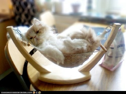 awesome chill cyoot kitteh of teh day hammock hanging relax relaxing - 6010687488