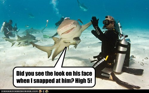 bro,high five,ocean,shark,water