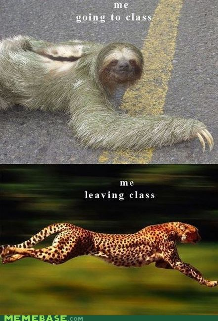 cheetah,class,evolution,Memes,school,sloth