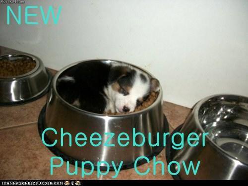 Cheezburger Image 6012899328