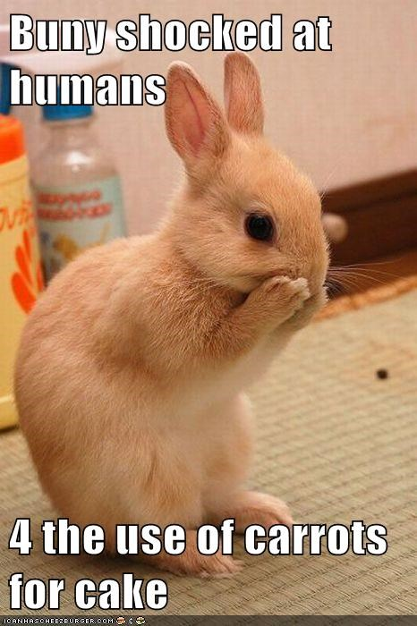 bunny,cake,food,noms,rabbit,shocked