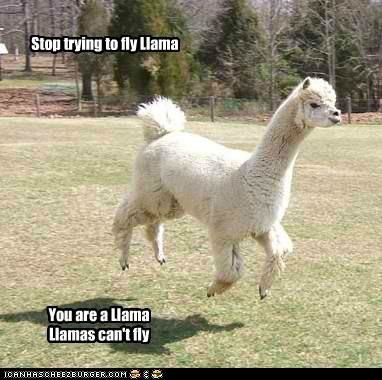 Stop trying to fly Llama You are a Llama Llamas can't fly