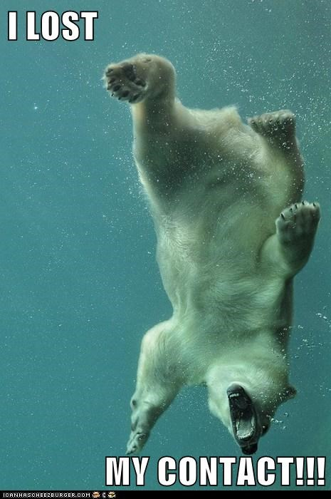 bear,contact lens,glasses,lost,polar bear,swim,water