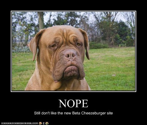 Cheezburger Image 6013445120