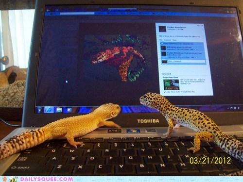 computer facebook gecko leopard gecko lizards reader squees - 6013453056