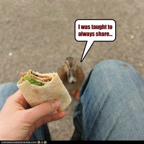 Cheezburger Image 6013489920